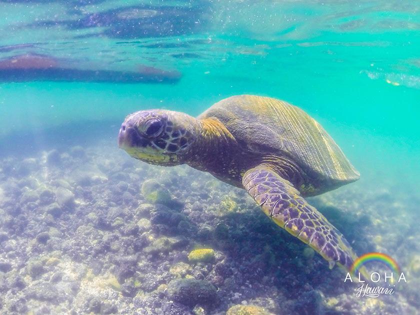 hawaii-(60)