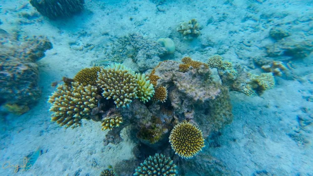 Snorkeling100_0563