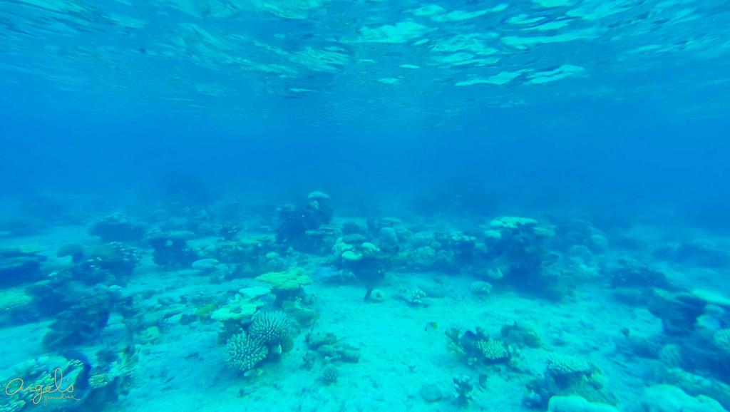 Snorkeling100_0566