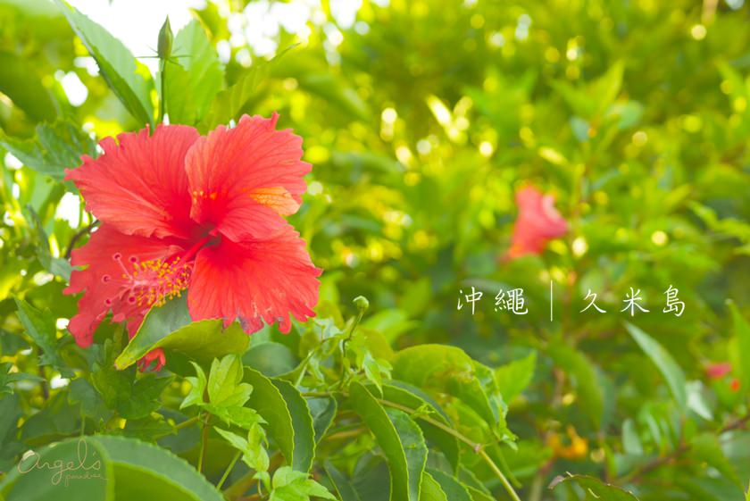 okinawaP1080015