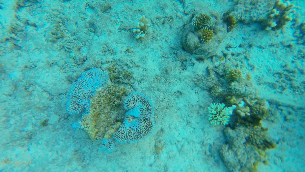 Snorkeling100_0564