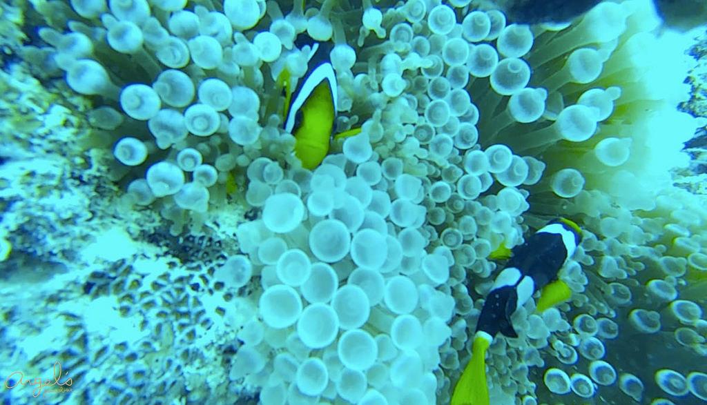 Snorkeling螢幕截圖 2015-06-10 11.45.44